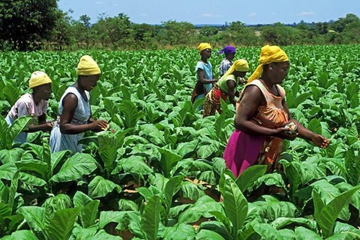 Zim needs $40m to compensate white farmers – report